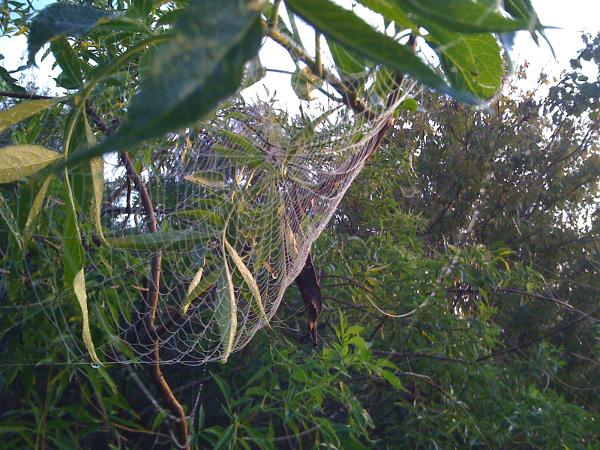 Green Cay spirderweb